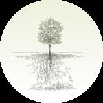 runt träd