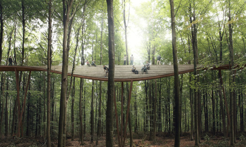 Treetop6